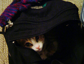 Don't let the cat out of the bag...